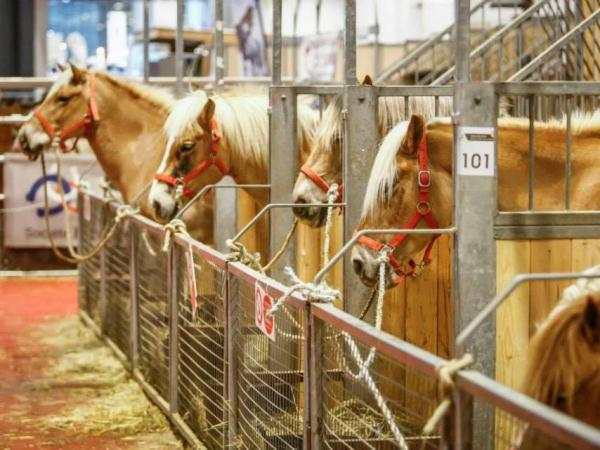 Le Salon du Cheval de Paris - Évènement à Villepinte
