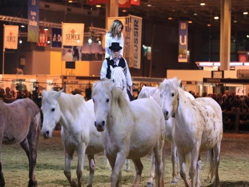 Photos salon international de l 39 agriculture v nement for Nocturne salon agriculture