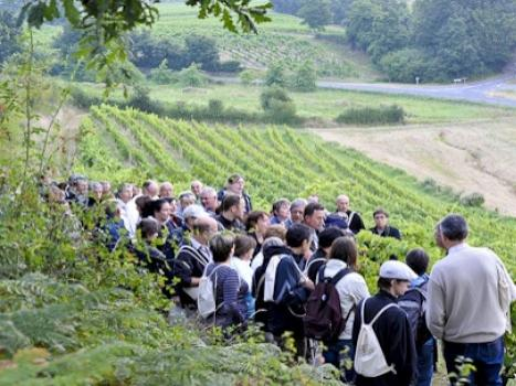 Vines, wines and hikes in the Loire Valley - Event in Nantes