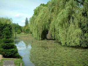 Ainay-le-Vieil castle - Canal with water lilies and trees, one weeping willow