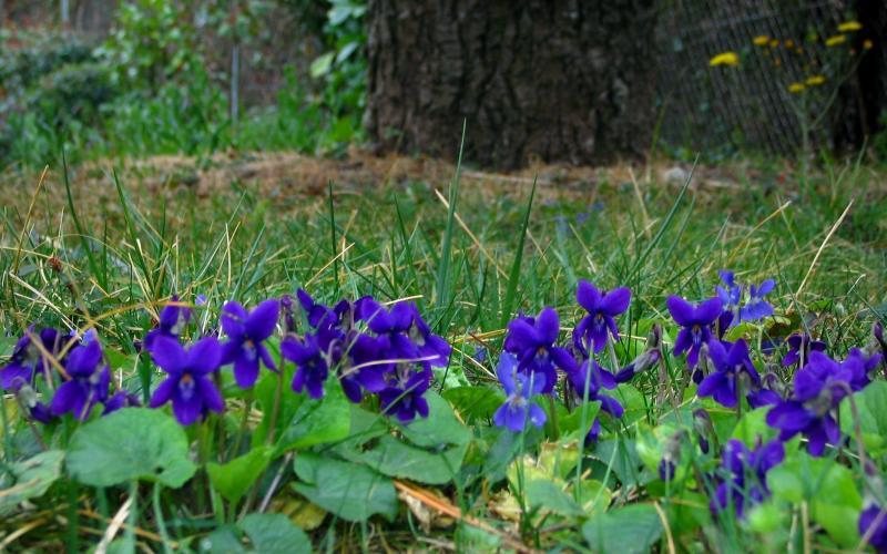 Violettes 3 Images De Qualit 233 En Haute D 233 Finition