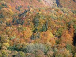 Alps landscapes in the Savoie - Trees of a forest with lively autumn colours