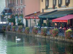 Annecy - Thiou canal with a swan (water bird), flowers, quayside (bank), restaurants and houses with colourful facades