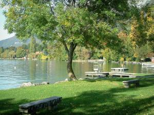 Annecy lake - Lawn with benches, tree on the edge of the lake and he forest in autumn