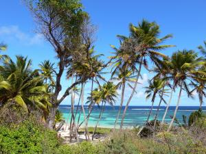 Anse Michel - View of the beach of Anse Michel with its coconut trees, white sand and turquoise waters; in the municipality of Sainte-Anne