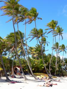 Anse Michel - Relax under the coconut trees on the white sand beach