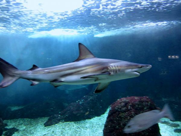 L Aquarium De La Guadeloupe Guide Tourisme Amp Vacances