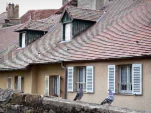 Arbois - Two pigeons on a low wall and houses with attic windows