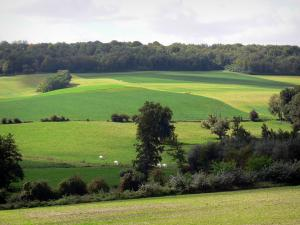 Ardre valley - Fields, meadows, herd of cows, trees
