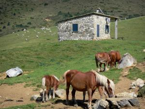 Ariège Pyrenees Regional Nature Park - Horses, stone hut, mountain pastures and herd of cows in the background