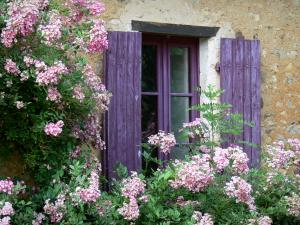 Asnières-sur-Vègre - Window of a house with purple shutters and flowering creeper