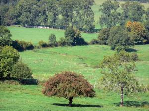 Auvergne Volcanic Regional Nature Park - Grassland (pasture) lined with trees