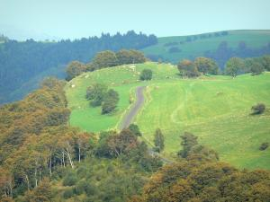 Auvergne Volcanic Regional Nature Park - Road lined with trees and pasture; in the Massif du Sancy mountains (Monts Dore)