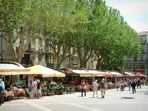 Avignon - Horloge square with its cafe terraces and its plane trees
