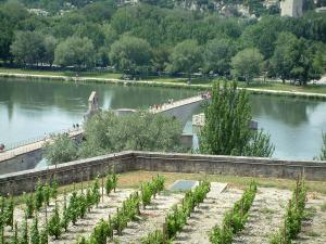 Avignon - Vineyards overhanging the Rhone river and the Saint-Bénezet bridge