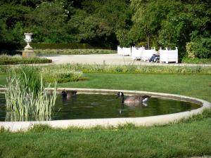 Bagatelle park - Wild geese paddling in a park pond