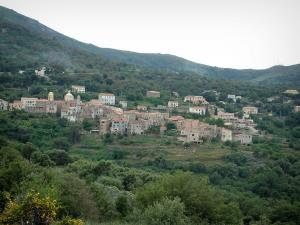 Balagne region - Hilltop village of Cateri surrounded by trees