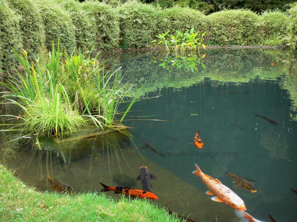 Photos bambouseraie de prafrance 34 images de qualit for Definition de jardin