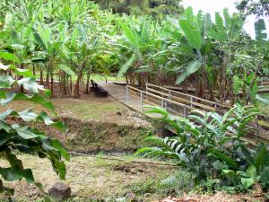 Banana museum - Walk in the park with many varieties of banana