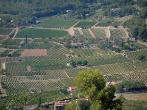 Bandol vineyards - Vines, houses, trees and forest