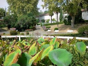 Barbotan-les-Thermes - Spa town (in Cazaubon): aquatic plants of the Parc Thermal spa garden