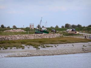 Bay of Somme - Shipwreck, cliffs, high vegetation, gulls on the sand