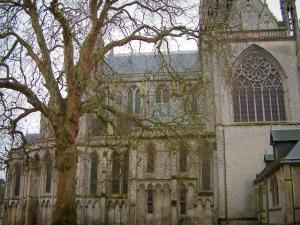Bayeux - Notre-Dame Cathedral and tree