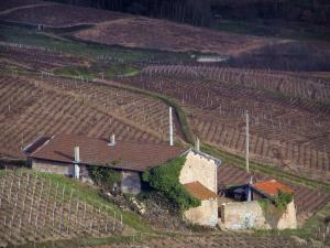 Beaujolais vineyards - House surrounded by vineyards