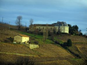 Beaujolais vineyards - Houses and vineyards
