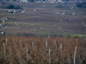 Beaujolais vineyards - Vineyards and houses