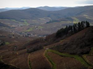 Beaujolais vineyards - Vineyards, trees, houses and hills