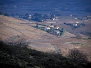 Beaujolais vineyards - From the Chiroubles terrace, view of vineyards