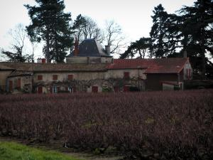 Beaujolais vineyards - Vineyards and house