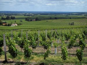 Bergerac Vineyards - Vineyards, houses and trees