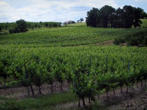 Bergerac Vineyards - Vineyards and trees