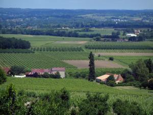Bergerac Vineyards - Trees, vineyards and houses