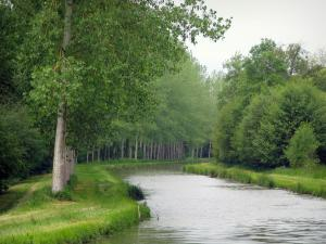 Berry canal - Canal lined with trees