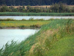 Berry landscapes - La Brenne Regional Nature Park: lakes, meadow and reedbed (reeds)