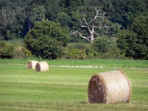 Berry landscapes - La Brenne Regional Nature Park: hay bales in a meadow, trees in background