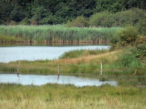 Berry landscapes - La Brenne Regional Nature Park: meadow, lake and reedbed (reeds)
