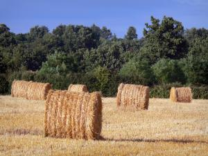 Berry landscapes - Hay bales in a field and trees in background