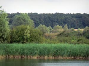 Berry landscapes - La Brenne Regional Nature Park: Tran lake, reeds and trees