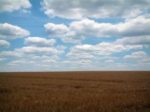 Berry landscapes - Wheat field and clouds in the blue sky