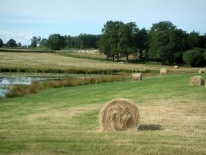 Berry landscapes - Straw bales, pond dotted with water lilies, pastures with herds of sheeps and cows, trees