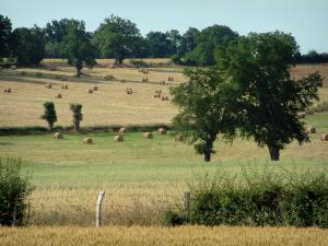 Berry landscapes - Trees and fields dotted with straw bales