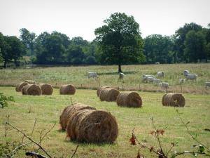 Berry landscapes - Branches, straw bales, pasture with cows and forest in background