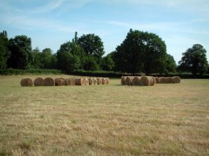Berry landscapes - Field with lined straw bales, trees in background