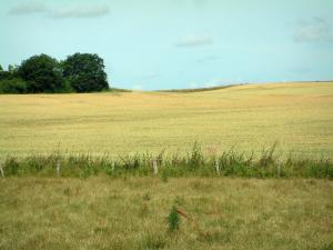 Berry landscapes - Pasture, wheat field and trees