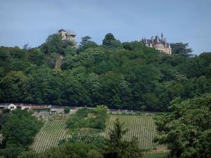 Berry landscapes - Vineyards, trees of a forest and a hilltop castle