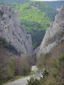 Bès valley - Barles water gap: rock faces and road lined with trees